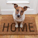 Consigli per chi vuole un animale in casa
